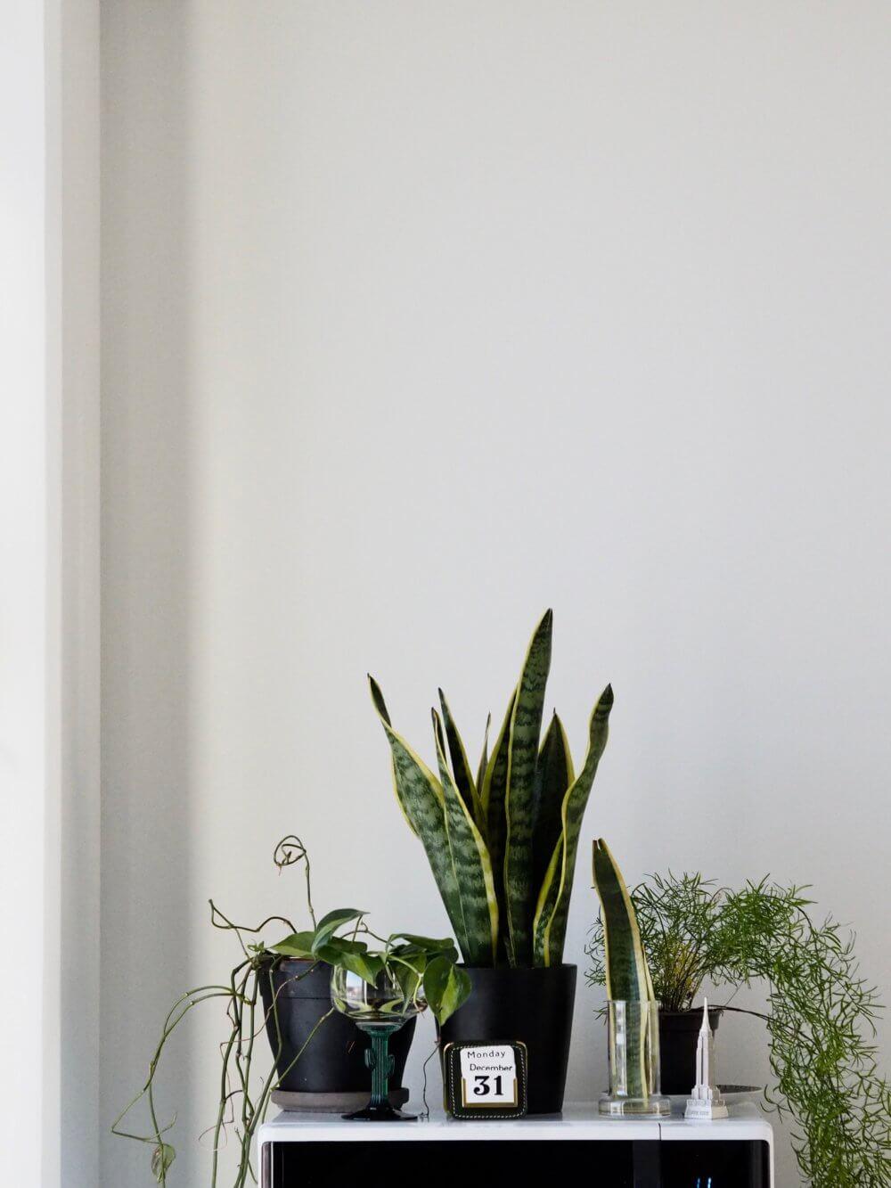 Viherkasvien täyttämä asunto. #YearInClarion